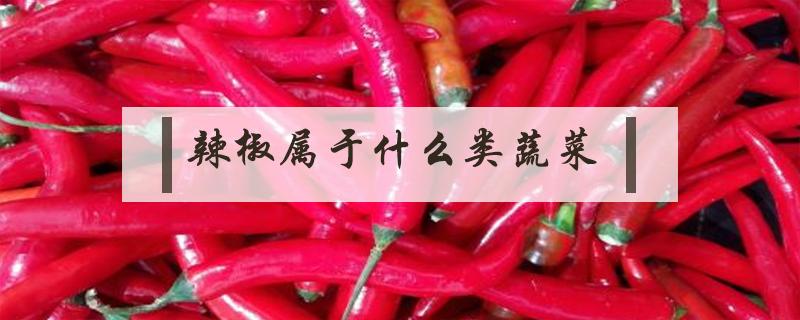 辣椒属于什么类蔬菜