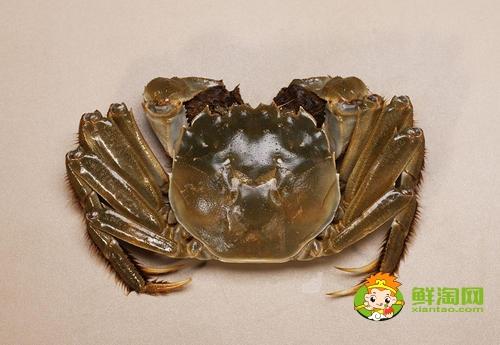 吃螃蟹是农历还是阳历,九月十月吃什么螃蟹