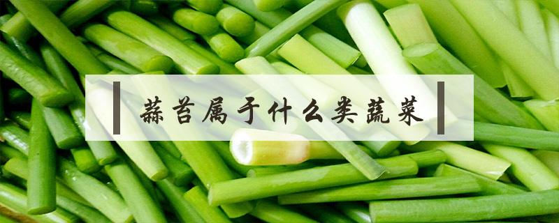 蒜苔属于什么类蔬菜