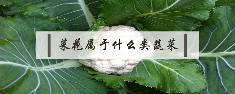 菜花属于什么类蔬菜