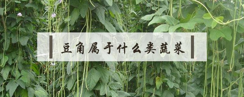 豆角属于什么类蔬菜