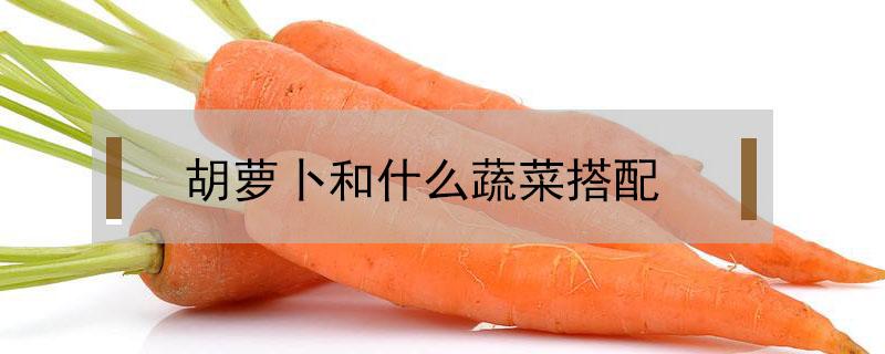 胡萝卜和什么蔬菜搭配